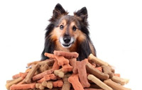 Dog Treats (image from wilmingtonpetshop.com)