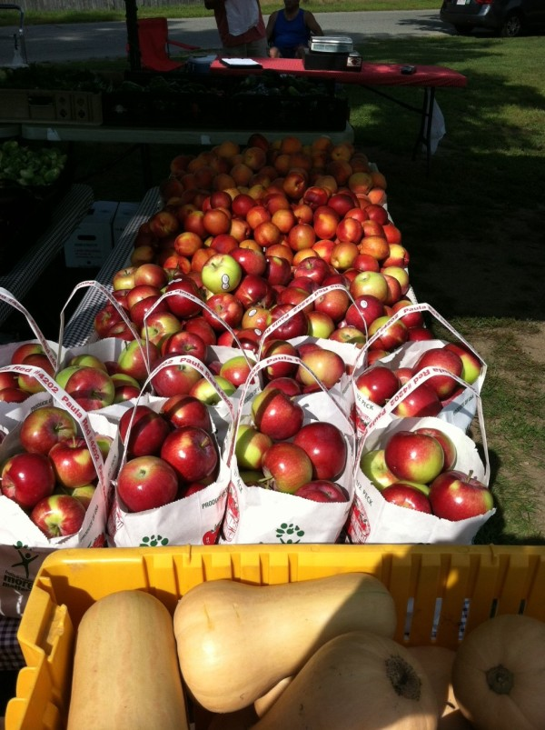 Apples at Lanni Orchards