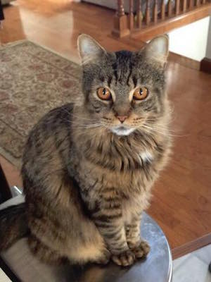 MISSING CAT: Have You Seen Snickers?