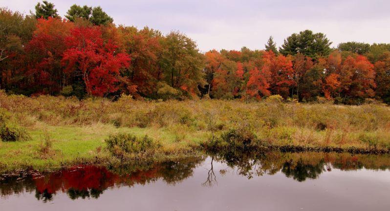 Fall In Wilmington 1
