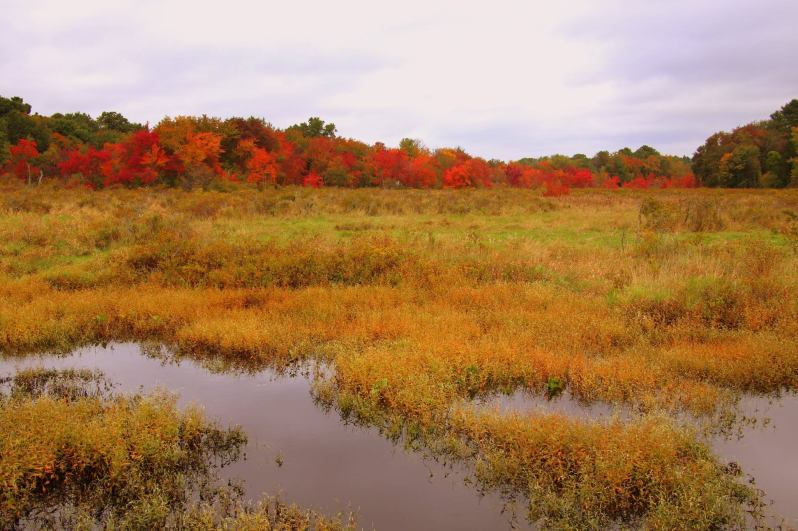 Fall In Wilmington 2