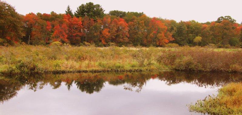 Fall In Wilmington 3