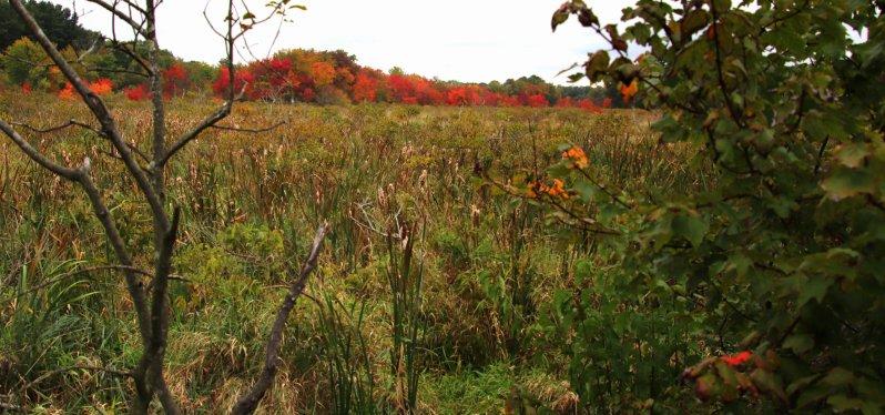Fall In Wilmington 4