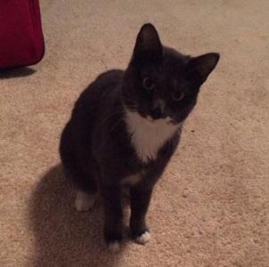 Missing Cat 1