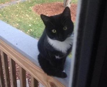Missing Cat 2