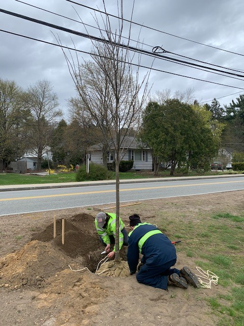Allen Tree Planting day 4-15-21 -b1